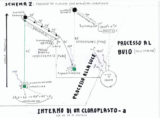 cloroplasto a2
