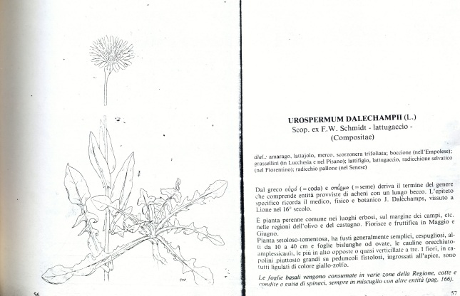 ERBE DI CAMPO0005'